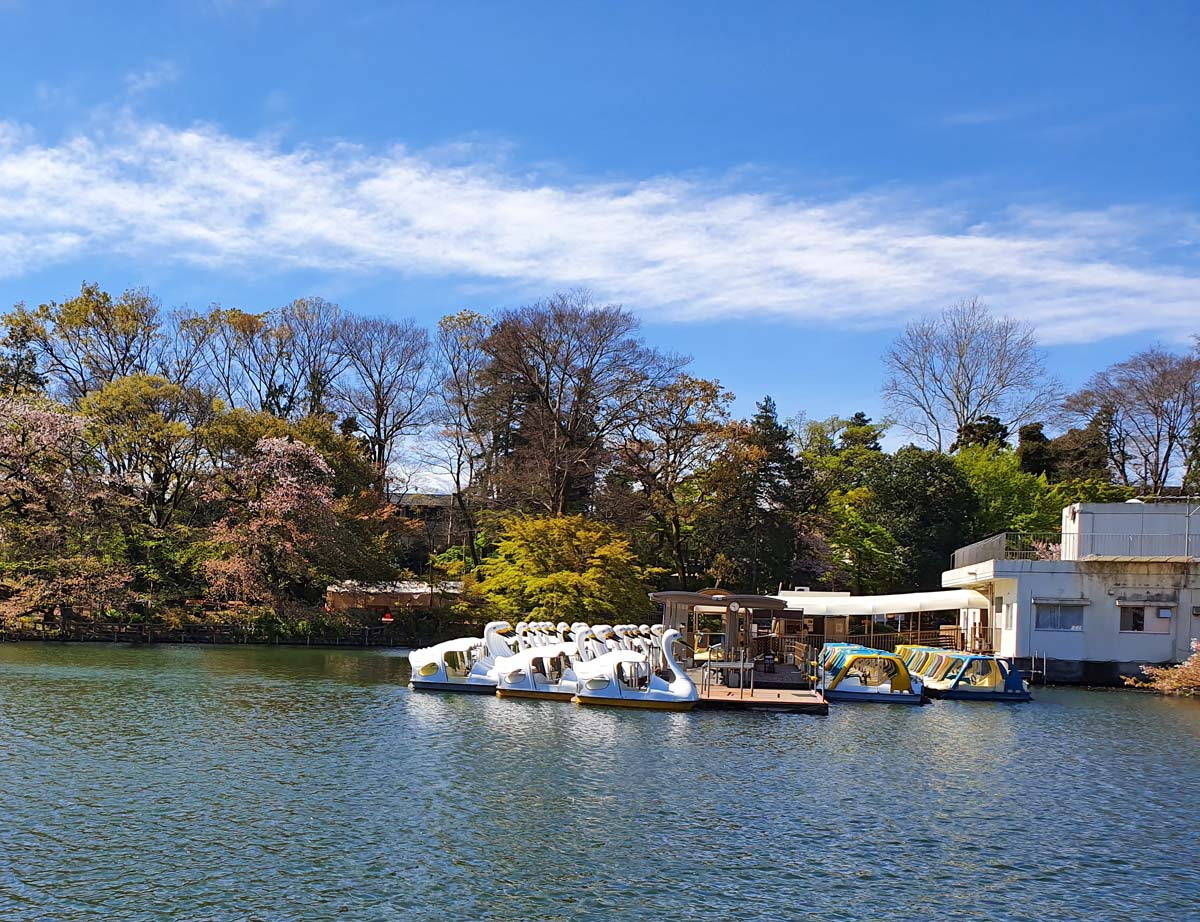 Swan Boats on Inokoshira Pond